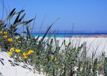 It's the return of the island's post-season showcase: Formentera in October